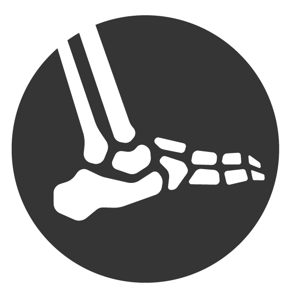 ankle joint